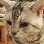 Goh さんのプロフィール写真